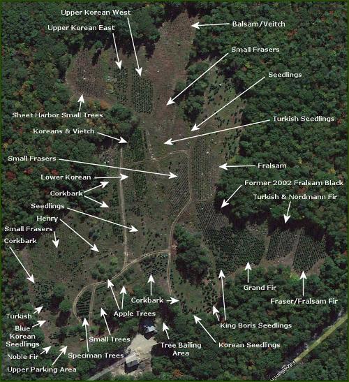 Christmas Tree Farm, Richmond, Swanzey, Keene, Rindge, NH